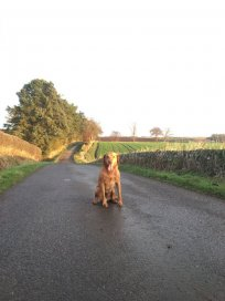 Dog-friendly countryside walk